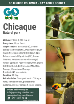 Chicaque Natural Park + Crazy Tree Hummingbird Feeders.