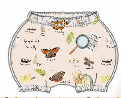 Butterfly Life Cycle Bloomer