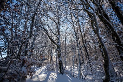 Forêt enneigée sur le massif de l'Espinouse