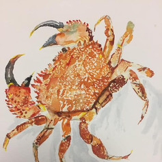 Cooked Crab - Sold