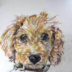 Cheeky Pup - For sale
