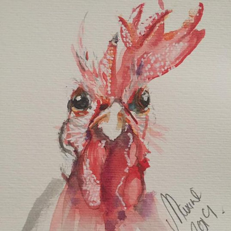 Cheeky Cockeral - For Sale