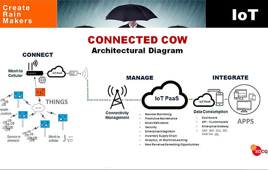 IoT Connected Cow Livestock Agriculture
