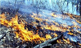 Co-op burn.jpg