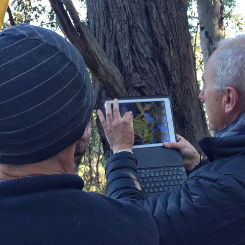 Monitoring nest boxes
