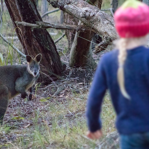 Wallaby surprised
