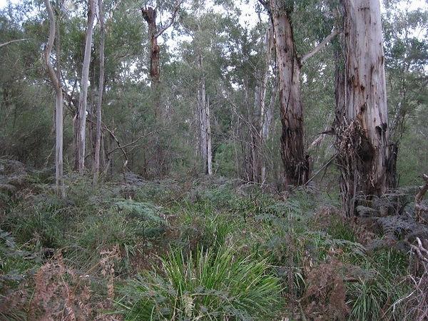 EVC Riparian Forest.jpg