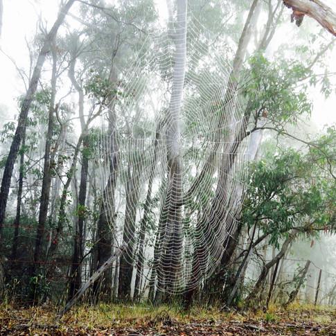 Mist in the bush