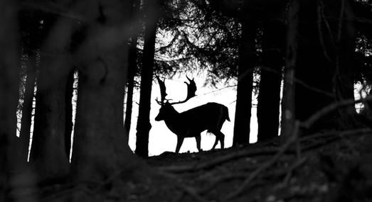 Slezsko2-Nature.jpg