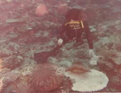 奄美大島大浜沖オニヒトデ駆除(1976年)