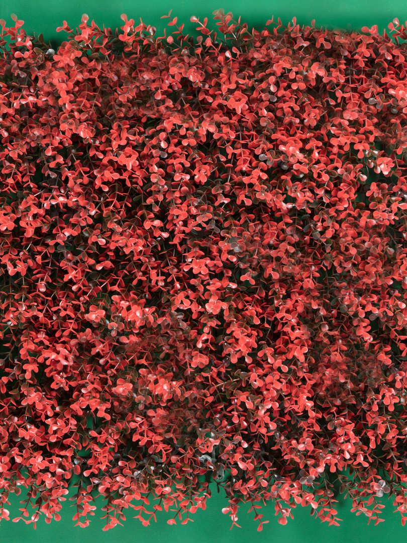 Arrayan-Rojo.jpg