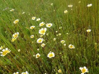 Spring Brings Wild Flowers to Rancho Murieta