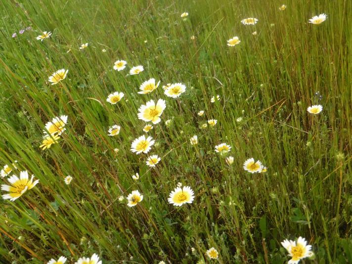 Spring Wildflowers in RM