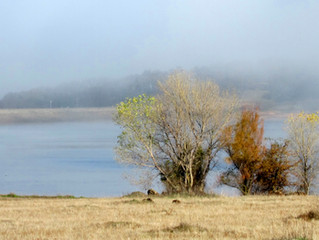 The fog creeps in on little cat feet.........
