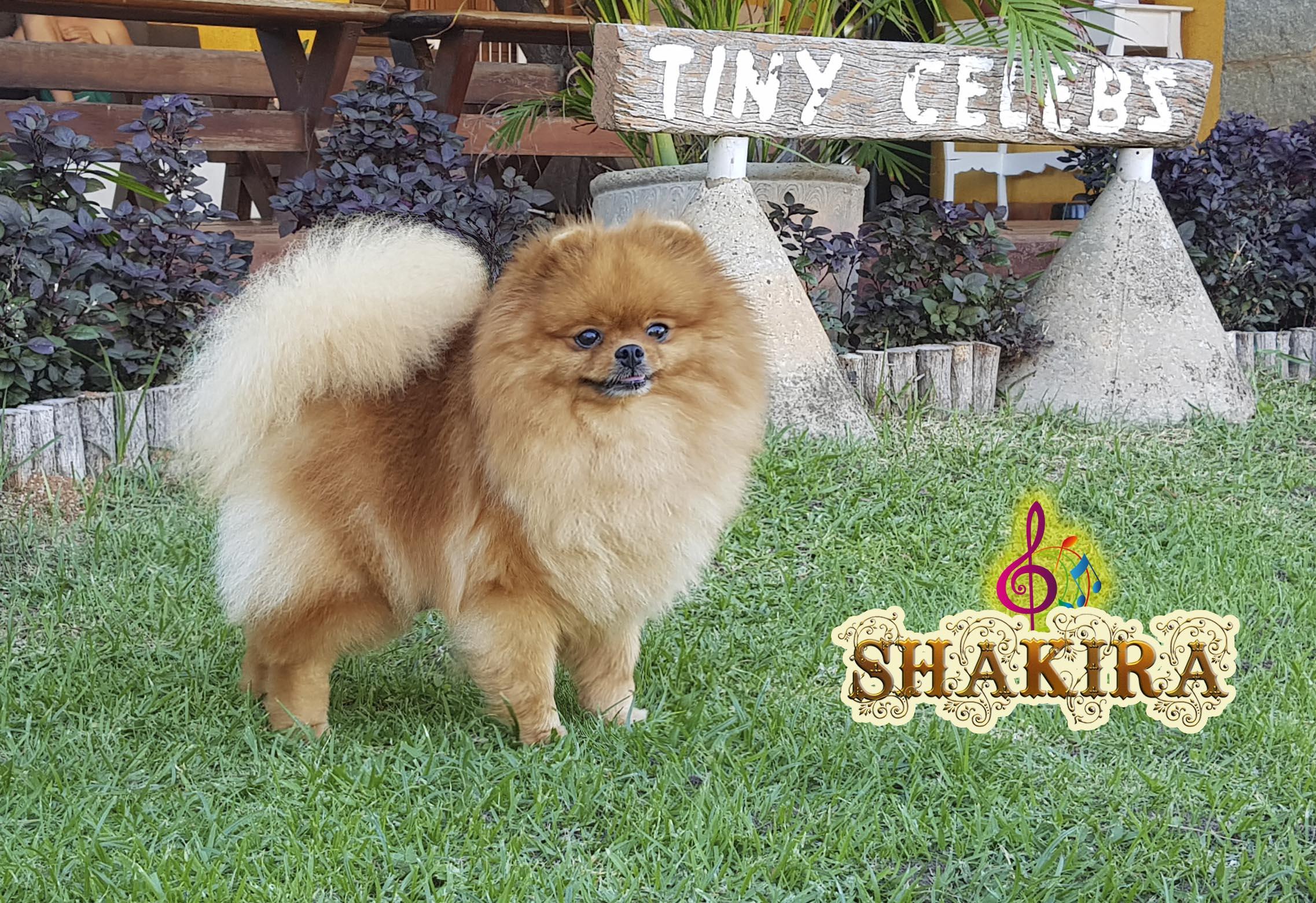 Shakira02