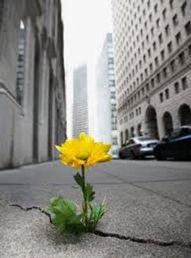 yellow flower biggest version.jpg