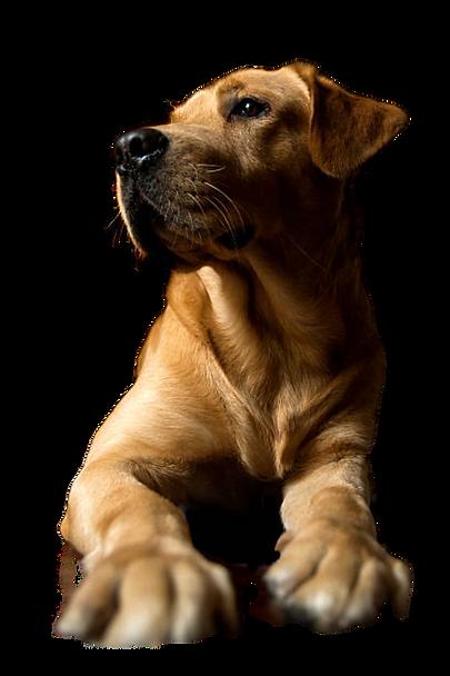 Pawsome Dog Walking - Professional Dog Care - New Forest UK