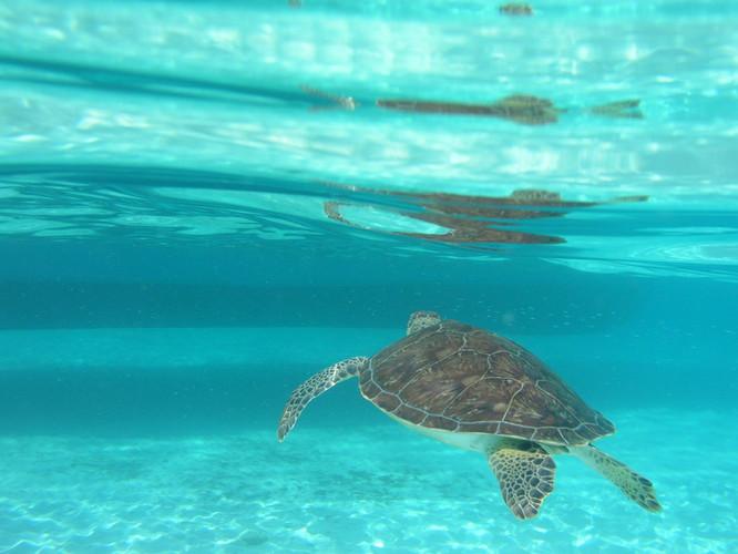 Turtle, Tintamarre