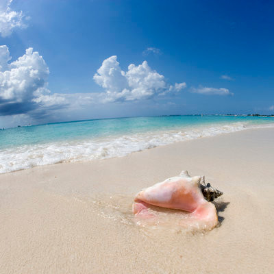 Queen Conch, Anguilla