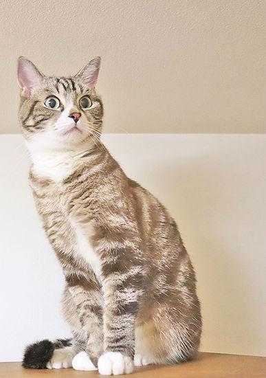 cat_01jpg.jpg