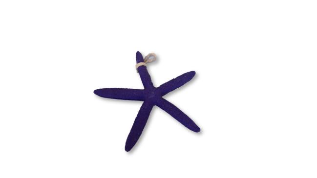 Sea Stars - Assorted