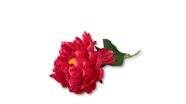 copy of Decorative Flowers - Assorted Stems