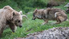 Nature and Wildlife Park Goldau