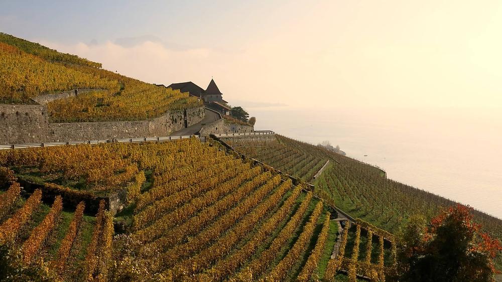 UNESCO world heritage | Lavaux | vineyards