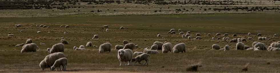 moutons%20rosy%20green%20woll_edited.png