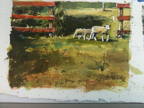 Lambs in the Paddock