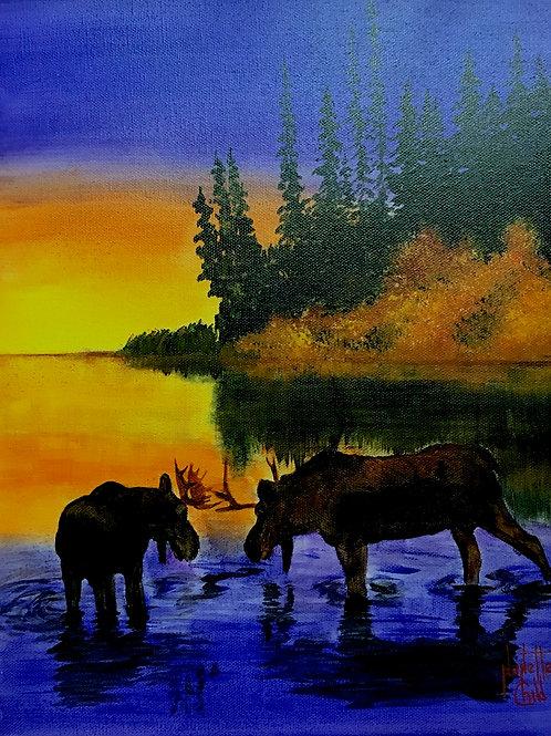 Moose in the Marsh