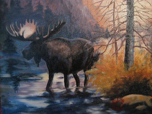 Moose in Oakley Marsh