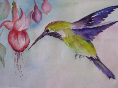 Hummingbird and Fuchsias