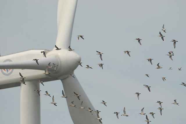 wind-turbine-and-birds-changhua-coast-cons-act.jpg