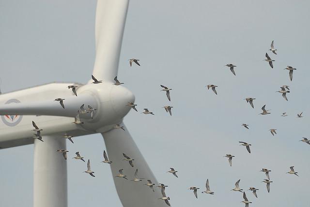 wind-turbine-and-birds-changhua-coast-cons-act.jpg