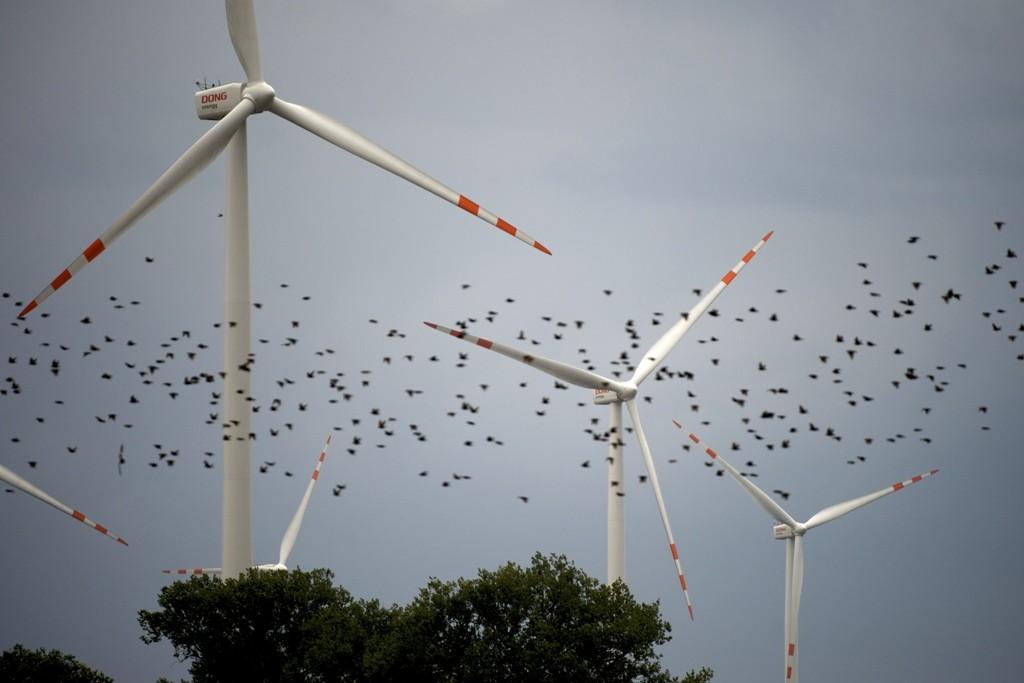 windbird (1).jpg