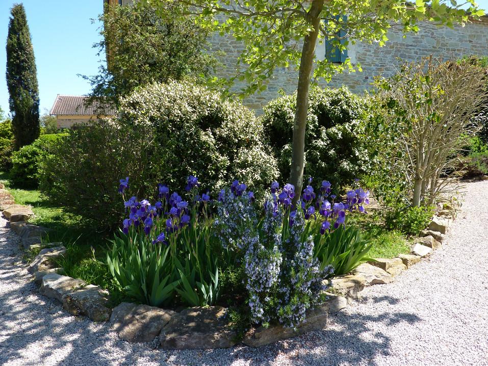 Le jardin - iris au printemps