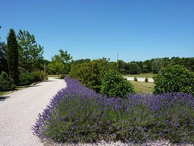 daramousque_069. Lavender bordering the