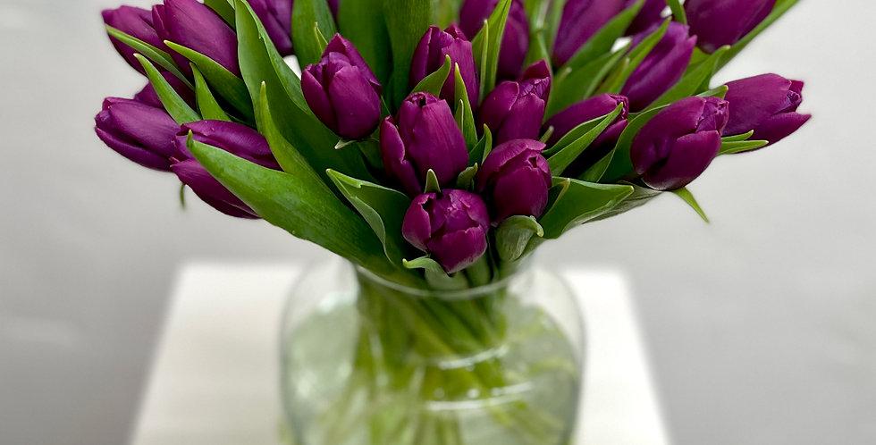 Tulips in Purplicious