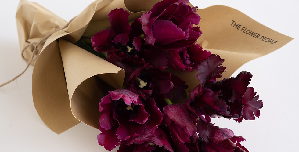 FEATHERED TULIPS in Deep Burgundy