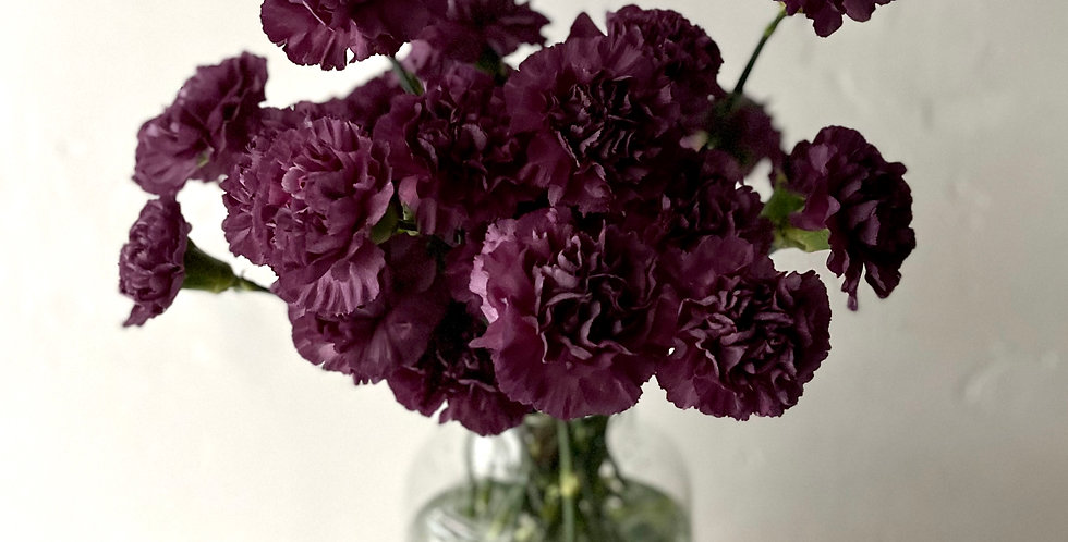 COLUMBIAN CARNATIONS in Eggplant