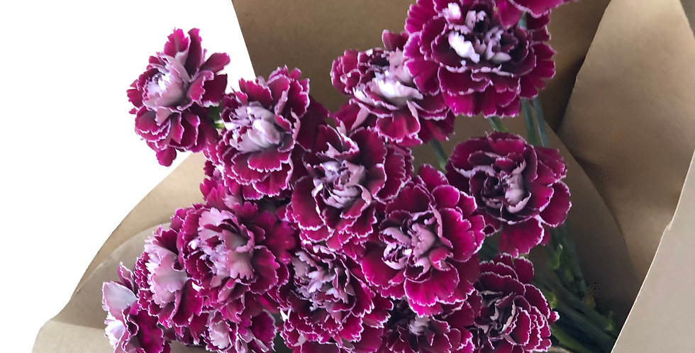 COLUMBIAN CARNATIONS in Red Wine