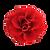 rose (1).png