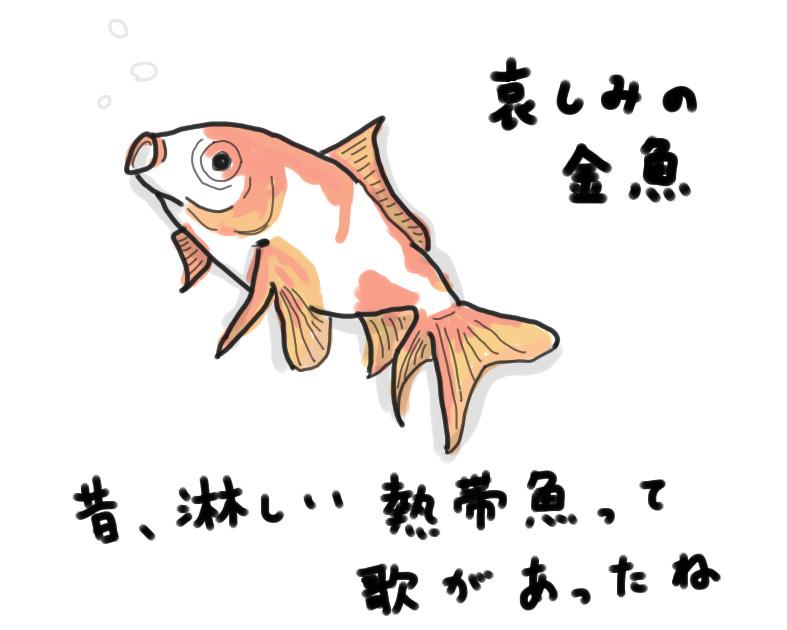 終活 哀しみの金魚