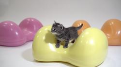 Kätzchen erkundet Air8