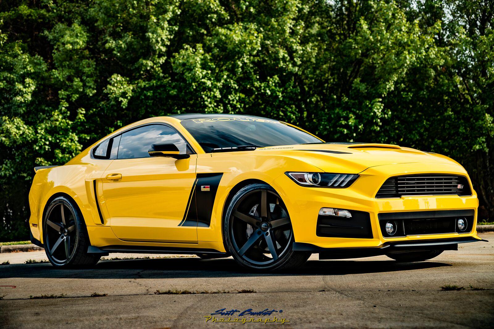 Roush Mustangs