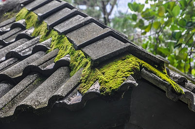 Remove-Moss-From-Roof-1024x680.jpg