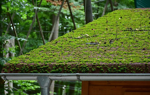 Moss-Removal-Moss-Prevention-Pacific-Nor