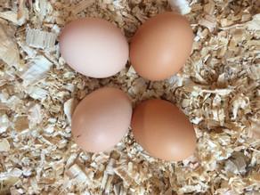 Best egg substitutes. It's no yolk.