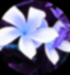 artflow_201807091816_edited.png